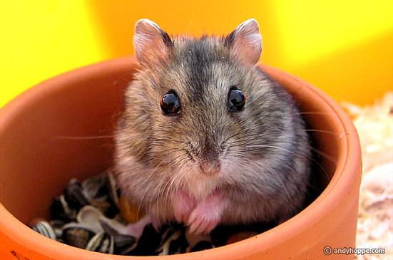 Hamster Kostenlos
